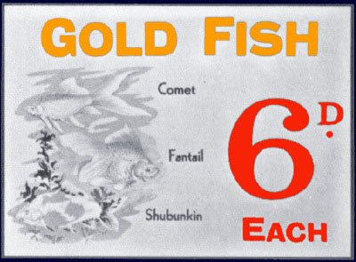 Goldfish for sixpence - the pet department at Woolworths, which operated in selected large stores until the early 1960s